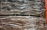 Wet Salted Cow Hide, Donkey Hide, and Cow Head for Sale