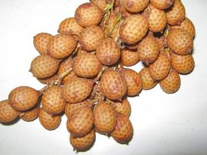 Wholesale rattan: Rattan Palm Seeds