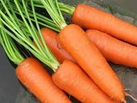100-150g Up Chinese Red Carrot