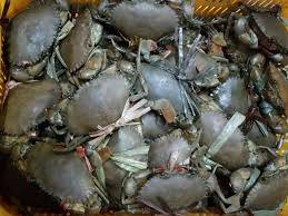 Wholesale king crab: Affordable Fresh Frozen and Live Mud Crabs , Red King Crabs , Soft Shell Crabs , Blue Crab