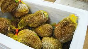 Wholesale durian: Frozen Durian
