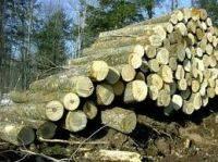 Wholesale Timber: Ash Logs