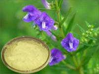 Scutellaria Baicalensis Extract