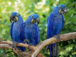 Wholesale Pet & Products: Macaw Parrots and Many Other for Sale
