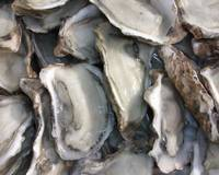 Wholesale frozen oyster: Frozen Oysters