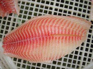 Tilapia fillet: Sell Frozen Tilapia Fillet and WGS