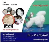 Sell Grooming Model Dogs