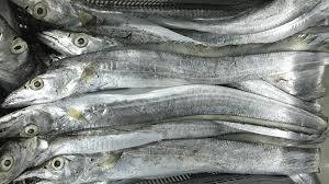 Wholesale seafood: High Quality Frozen Ribbon Fish Good Quality