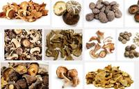 Sell dried mushroom,frozen mushroom