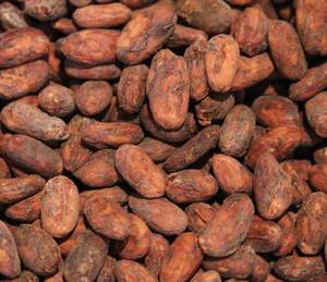 Wholesale drink: Cocoa