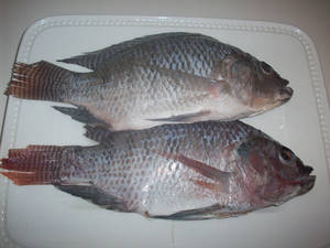 Wholesale frozen tilapia fish: Best Quality Seafood Product Frozen Black Tilapia Fish
