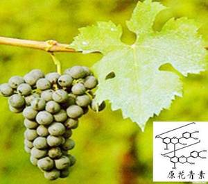 Wholesale grape seed extract: Grape Seed Extract
