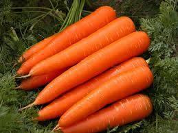 fresh carrot: Sell sweet fresh carrot