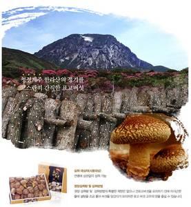 Wholesale fresh mushroom: Fresh Shitake Mushroom