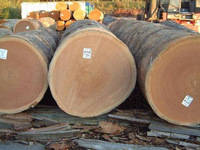 Bubinga Logs and Sawn Timber for Sale.
