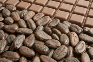 Wholesale chocolate: Cocoa
