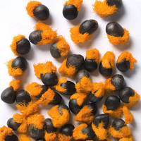 Strelitzia Reginae Seeds (Bird of Paradise, Crane Flower)