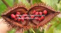 Sell high quality Natural Delta- tocotrienol NLT90% extracted from Annatto seed