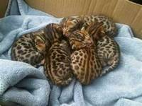 exotic pets for sale