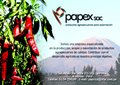 Papex Group Company Logo