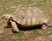 Wholesale Pet & Products: African Tortoises and Tortoises Egg