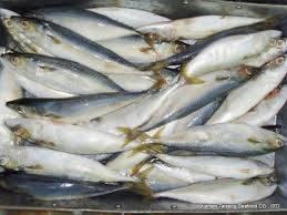 Tilapia fillet: Sell Frozen Tilapia Fillet , Salmon Fish , Mackerel
