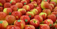 Sell sweet red delicious fresh apple