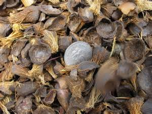 Wholesale coconut: Palm Kernel Shell,Coconut Shell for Sale Now with Low Price and Good Payment Terms