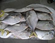 Wholesale frozen shiitake: Frozen Moon Fish Whole Round