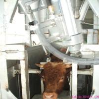 Living Cattle Pneumatically Gun (Original: USA)