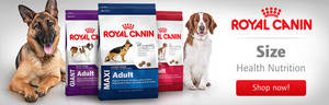 Wholesale dog food: Royal Canin Maxi Adult Dry Dogs Food