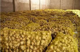 air fresh: Sell 2016 fresh ginger price yellow ginger / Thailand fresh ginger