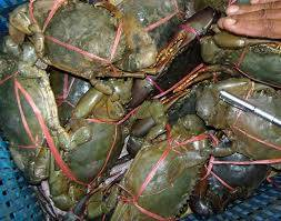Wholesale king crab: Fresh Frozen and Live Mud Crabs , Red King Crabs , Soft Shell Crabs , Blue Crab and Blue Crabs