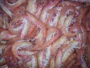 Wholesale packing box: Frozen King Prawns, White Shrimps, Black Tiger Shrimps Grade A