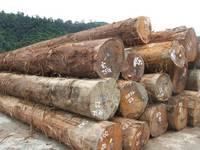 Teak, Mahogany, Tali, Padouk, Doussie Round Logs for Sale