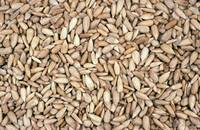Sun Flower Seeds,Oats,Amaranthus Seed,Dill Seed