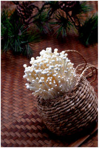 Wholesale enoki: Organic Fresh Fine Winter Enoki Mushroom
