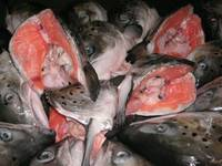 Salmon Heads V Cuts