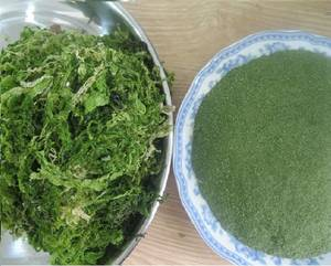 Wholesale sea lettuce: Ulva Lactuca