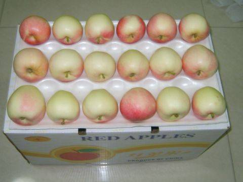 Sell fresh sweet royal gala apple fruit
