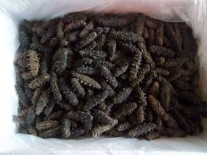 Wholesale frozen shiitake: Frozen / Dried Sea Cucumber