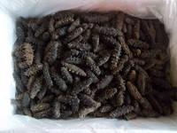 Frozen / Dried Sea Cucumber