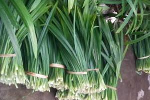 Wholesale Spices & Herbs: Pandanus Leaves