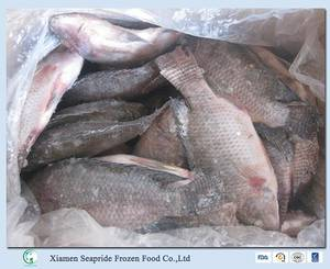 Wholesale frozen tilapia fish: Frozen Tilapia Fish Whole