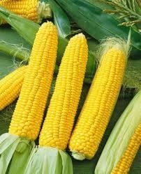 Wholesale Corn: Yellow Corn