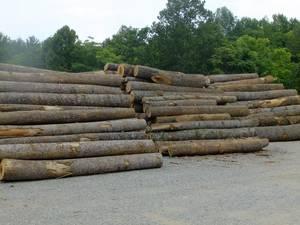 Wholesale Timber: Poplar Logs, Pine Logs,Spruce Logs,Beech Logs