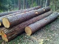 Poplar Logs, Pine Logs,Spruce Logs,Beech Logs 3
