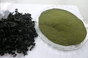 Wholesale seaweed salad: Wakame