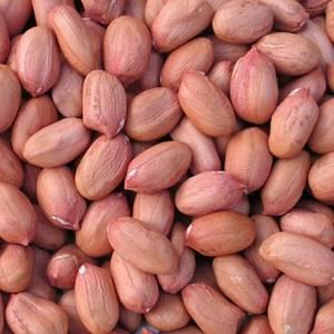 Wholesale bold: Bold Peanut