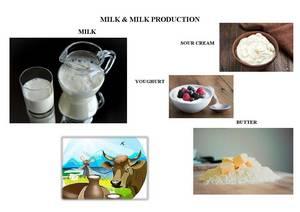 Wholesale Milk: Milk
